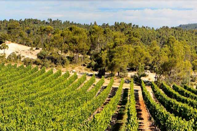 Ambiance Vignes : Vous êtes au coeur de la Route des Vins de Bandol!